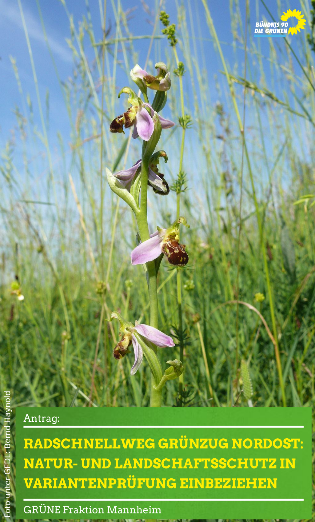 Orchideen in Wiese