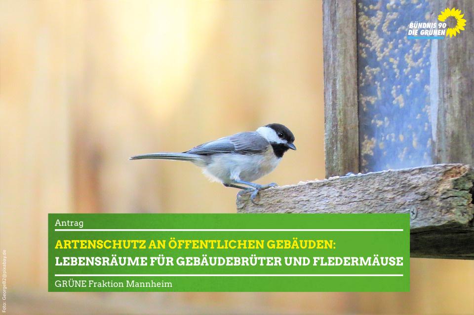 Vogel vor Vogelhaus
