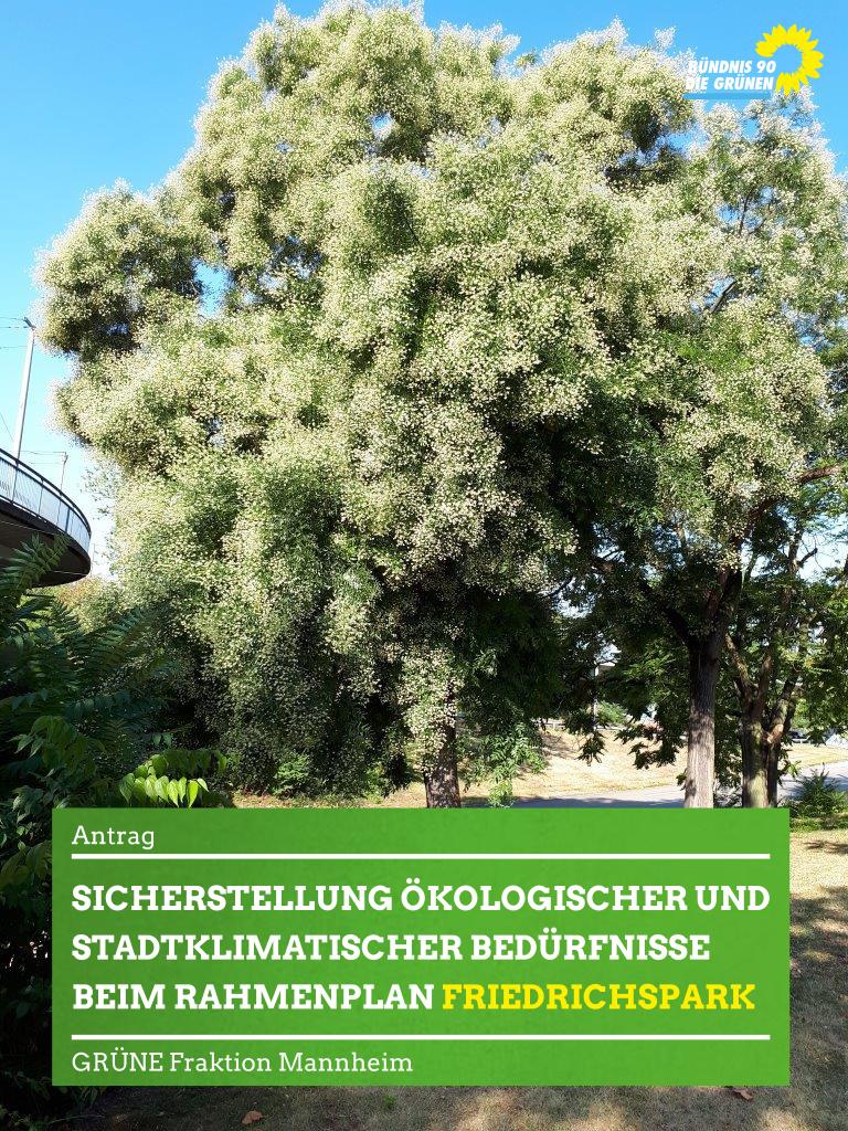 Blühender Baum im Friedrichspark