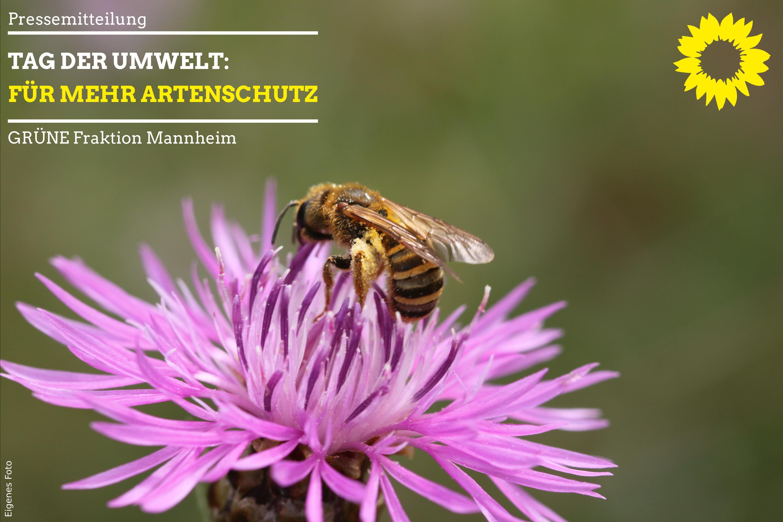 Wildbiene auf Diestelblüte