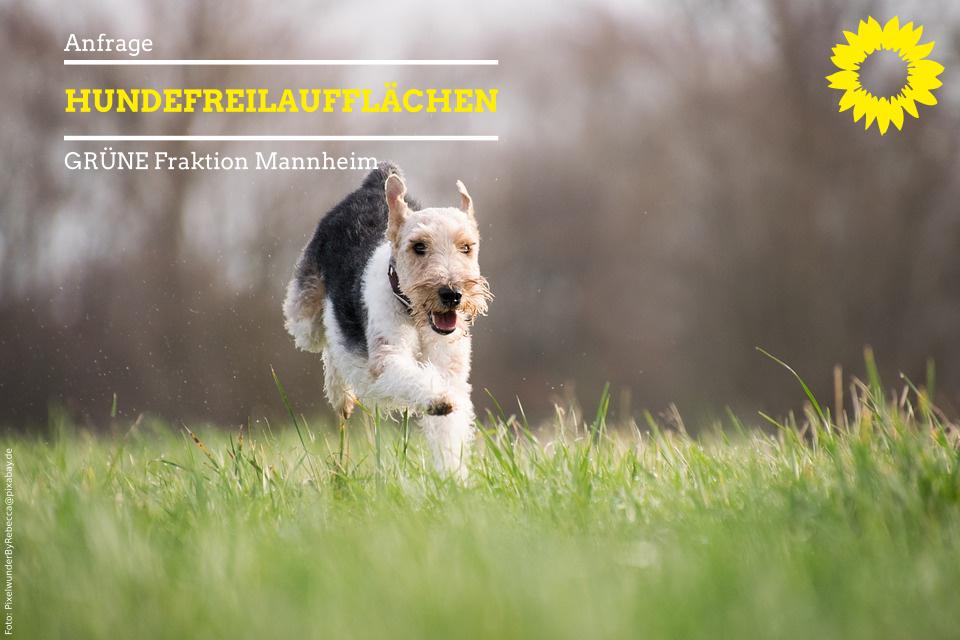 Hund läuft über Wiese