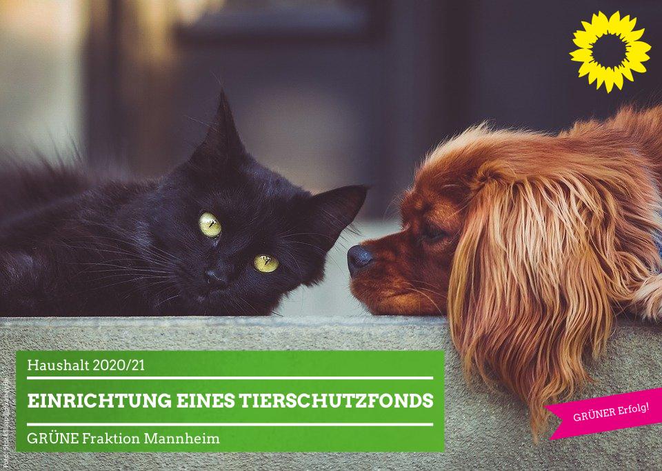 Hund und Katze einträchtig nebeneinander