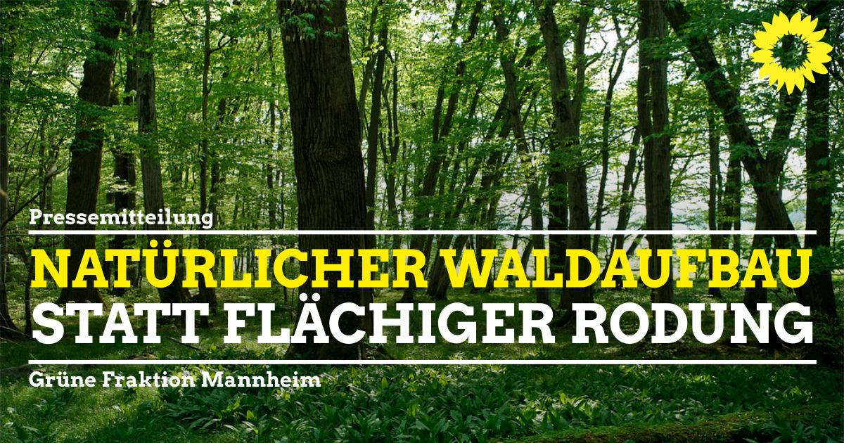 Hainbuchenwald