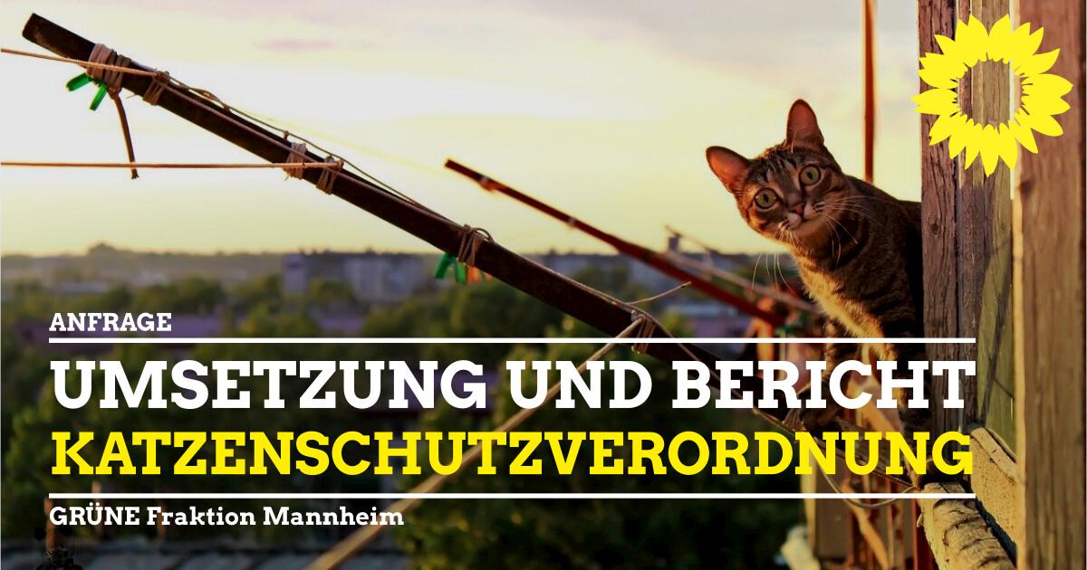 Umsetzung Katzenschutzverordnung